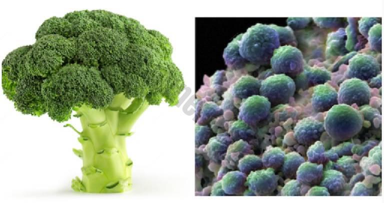 foto di broccoli e tumore